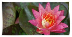 Beach Sheet featuring the photograph Pink Water Lily Beauty by Amee Cave
