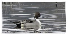 Pintail Duck Beach Sheet