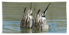 Beach Towel featuring the photograph Pintail Ducks Dive by Tam Ryan