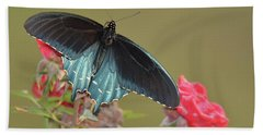 Pipevine Swallowtail Beach Sheet by Alan Lenk