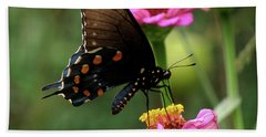 Pipevine Swallowtail Butterfly Beach Towel