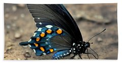 Pipevine Swallowtail Close-up Beach Sheet