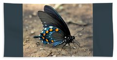 Pipevine Swallowtail Close-up Beach Sheet