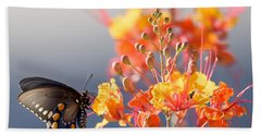 Beach Towel featuring the photograph Pipevine Swallowtail by Dan McManus