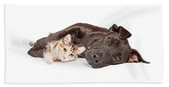 Pit Bull Dog And Kitten Cuddling Beach Towel