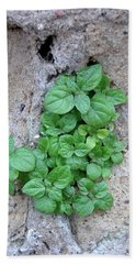 Plant In Stone Naples Italy Beach Sheet