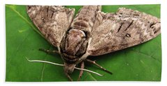 Plebeian Sphinx Moth Beach Sheet