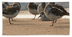 Plovers In The Morning Sunlight Beach Towel