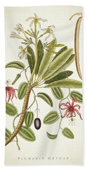 Plumeria Obtusa Botantical Print Beach Towel