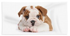 Po-faced Bulldog Beach Towel