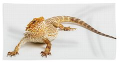 Pogona Isolated Beach Towel