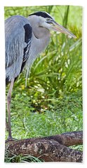 Poised And Focused Beach Towel by Judy Kay