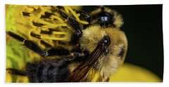 Beach Towel featuring the photograph Pollen Collector  by Jay Stockhaus