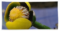 Pond Lily In Bloom Beach Towel