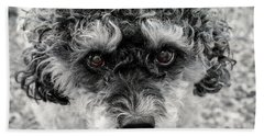 Poodle Eyes Beach Towel