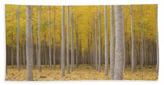 Poplar Tree Farm In Fall Season Beach Towel by Jit Lim