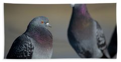 Beach Sheet featuring the photograph Portrait Of A Pigeon by Lora Lee Chapman