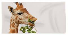 Portrait Of A Rothschild Giraffe IIi Beach Sheet