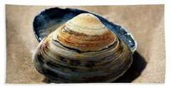 Portrait Of A Seashell At Long Beach Island Beach Towel