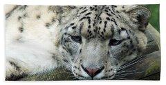 Portrait Of A Snow Leopard Beach Sheet