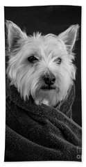 Portrait Of A Westie Dog Beach Sheet by Edward Fielding