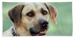 Portrait Of A Yellow Labrador Retriever Beach Sheet