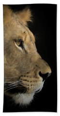 Beach Towel featuring the digital art Portrait Of A Young Lion by Ernie Echols