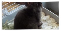 Beach Towel featuring the photograph Portrait Of Bunbunz by Denise Fulmer