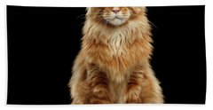 Portrait Of Ginger Maine Coon Cat Isolated On Black Background Beach Towel