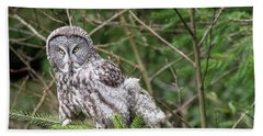 Portrait Of Gray Owl Beach Towel by Greg Nyquist