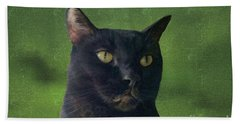 Beach Towel featuring the photograph Portrait Of Salem The Cat by Lee Boyd and Janette Boyd