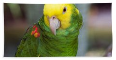 Posing Parrot Beach Sheet by Kenneth Albin