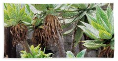 Potted Agave Plants Beach Sheet