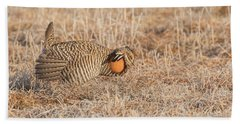Beach Towel featuring the photograph Prairie Chicken 10-2015 by Thomas Young