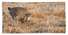 Beach Towel featuring the photograph Prairie Chicken 11-2015 by Thomas Young