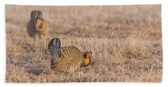 Prairie Chicken 4-2015 Beach Towel