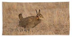 Prairie Chicken 6-2015 Beach Towel