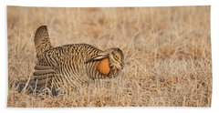 Beach Towel featuring the photograph Prairie Chicken 9-2015 by Thomas Young