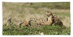 Prairie Dog Family 7270 Beach Sheet