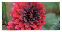 Pretty Blooming Red Dahlia Flower Blossom Beach Sheet