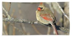 Pretty Female Cardinal Beach Towel by Brook Burling
