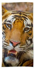 Prime Tiger Beach Towel
