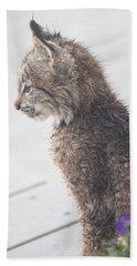 Profile In Kitten Beach Towel