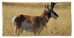Pronghorn Antelope Beach Towel