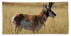 Pronghorn Antelope Beach Towel by Cindy Murphy - NightVisions