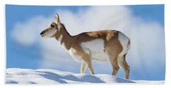 Pronghorn Doe On Snowy Ridge Beach Sheet