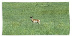 Pronghorn In A Sea Of Green Beach Sheet