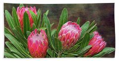 Beach Towel featuring the photograph Proteas In Bloom By Kaye Menner by Kaye Menner