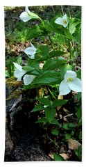 Beach Towel featuring the photograph Protected Wild Trillium  by LeeAnn McLaneGoetz McLaneGoetzStudioLLCcom
