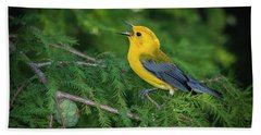 Prothonatory Warbler 9809 Beach Sheet